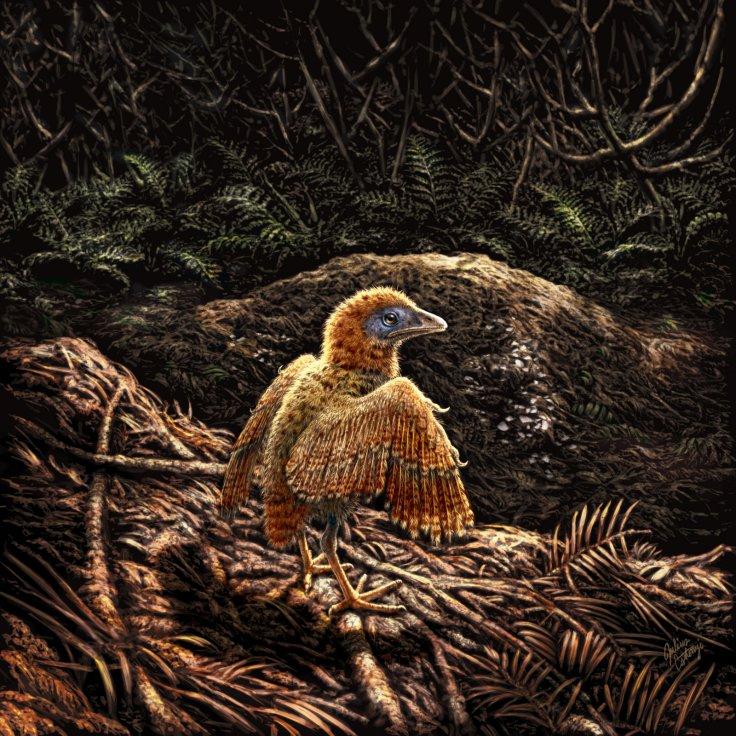 Las Hoyas fossil study