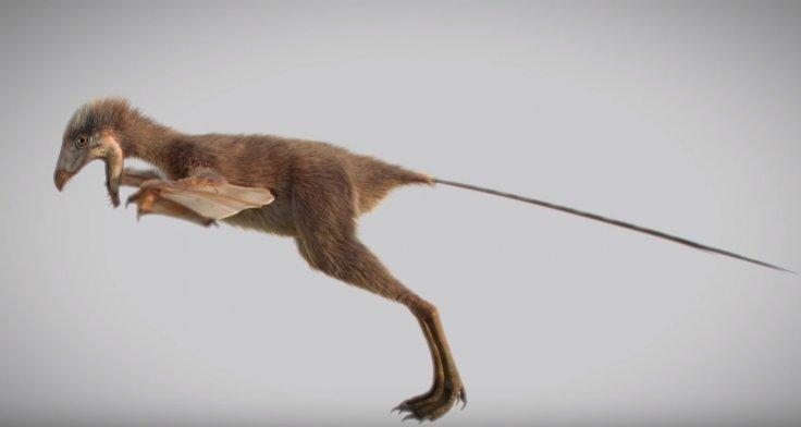 Tiny dinosaur