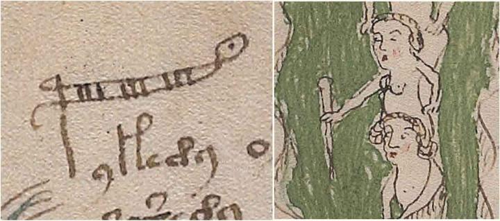 This shows the word 'palina' which is a rod for measuring the depth of water, sometimes called a stadia rod or ruler. The letter 'p' has been extended.
