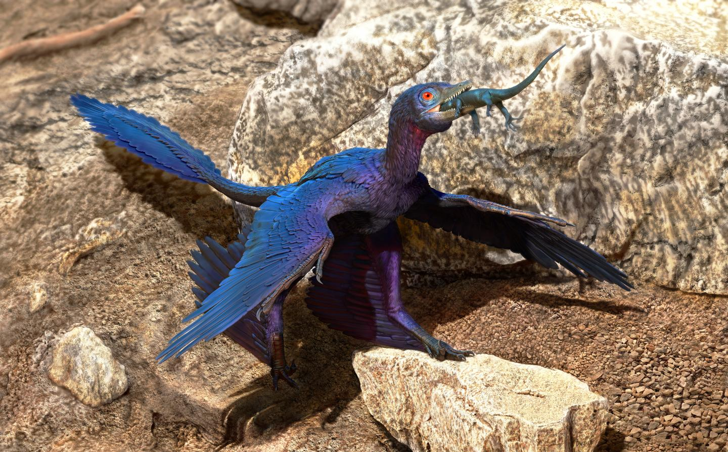 Researchers found new lizard species inside ancient microraptor's stomach