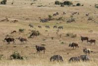 Masai Mara plains in East Africa