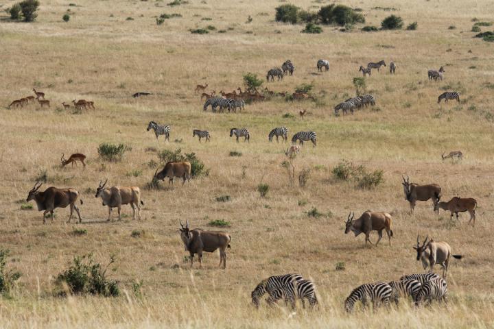 Masai Mara plains in East Africa
