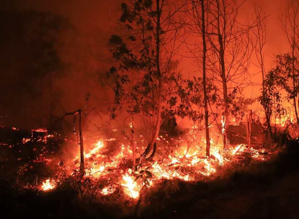 After Amazon fire, it's Sumatra forest that's burning; WWF shouts for help
