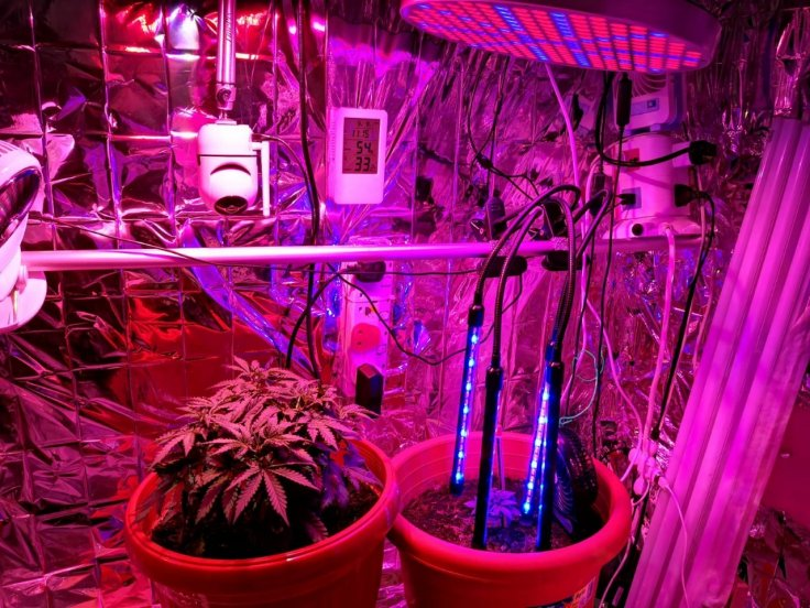 View of interior of makeshift greenhouse, erected within a residential unit, raided by CNB on 9 September 2019.