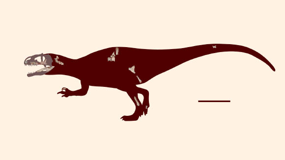 Skeletal reconstruction of Siamraptor suwati. Scale bar – 1 m. Image credit: Chokchaloemwong et al, doi: 10.1371/journal.pone.0222489.