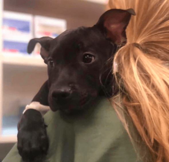 3-month-old puppy