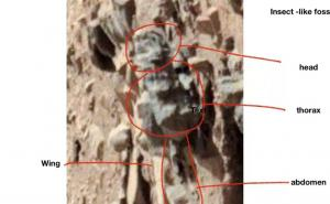Insects on Mars