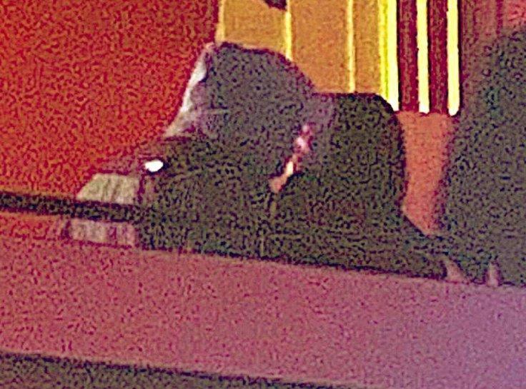 Pete Davidson And Kaia Gerber
