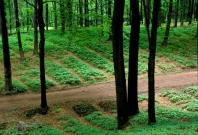herbal forest farming