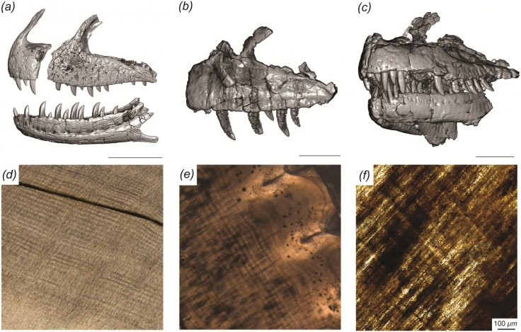 Craniofacial and dental histology of the theropod dinosaurs included in this study