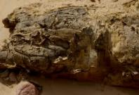 The mummy in the city of Aswan