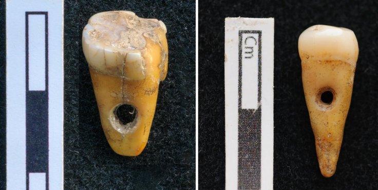 The two drilled 8,500-year-old human teeth found at Çatalhöyük in Turkey.