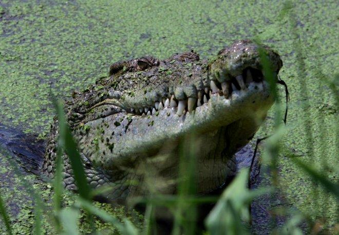 Malaysia: Man killed by crocodile while fishing in Sabah