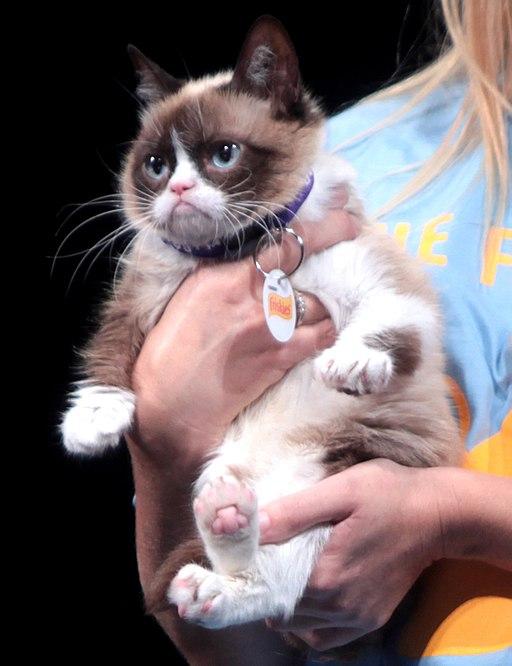 Tardar Sauce, (Grumpy Cat)