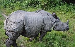 One- horned Rhino