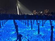 Light-emitting stones in Rotterdam