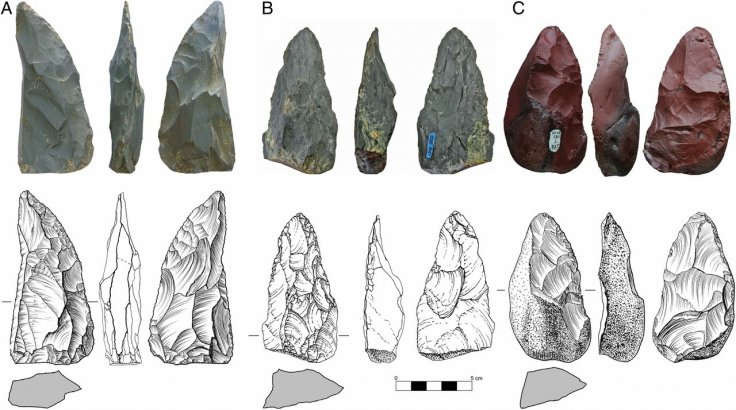 Stone artifacts from Chagyrskaya Cave, sublayer 6c/1. (A–C) Photographs, line drawings, and cross-sectional profiles of three plano-convex bifacial tools diagnostic of Micoquian Bocksteinmesser and Klausennischemesser types