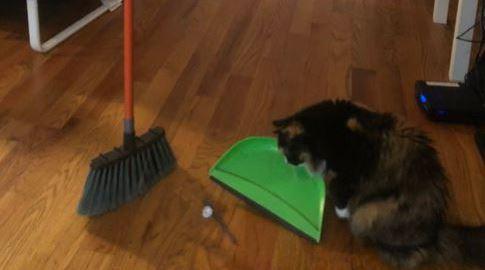 Broom challenge