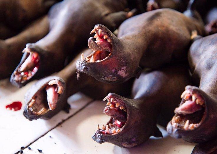 Bats, rats, snakes still for sale in Indonesian market amid coronavirus fears