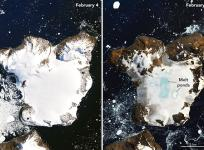 Satellite images show the effects of a prolonged warm spell on Eagle Island, in the far north of the Antarctic Peninsula, NASA says.