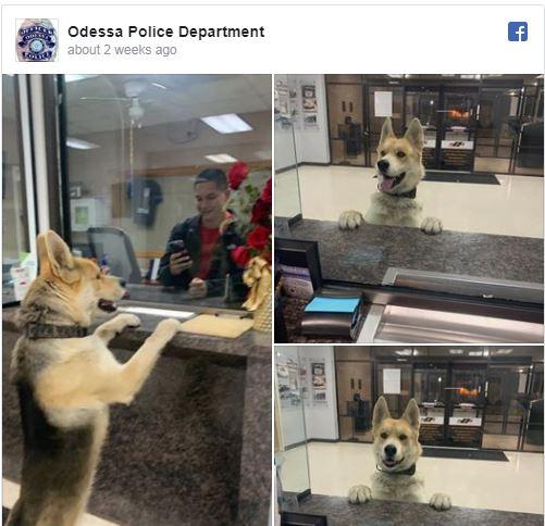 Odessa police station Chico