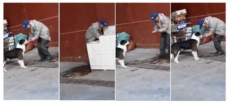 Old man feeding a thirsty stray dog