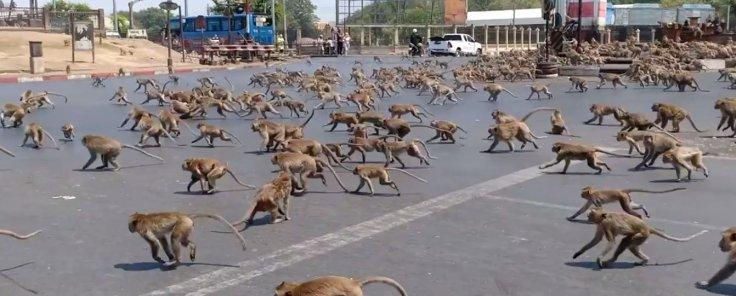 Monkeys fighting