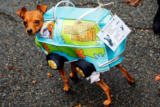 Halloween 2016: Take a look at these adorable puppies flaunting their costumes at 26th annual Halloween dog parade