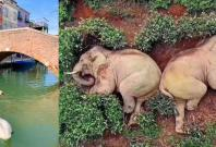 Fake animal pictures