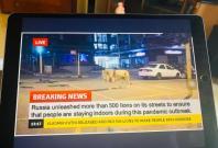 Russia tiger fake news