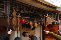 wildlife market in China