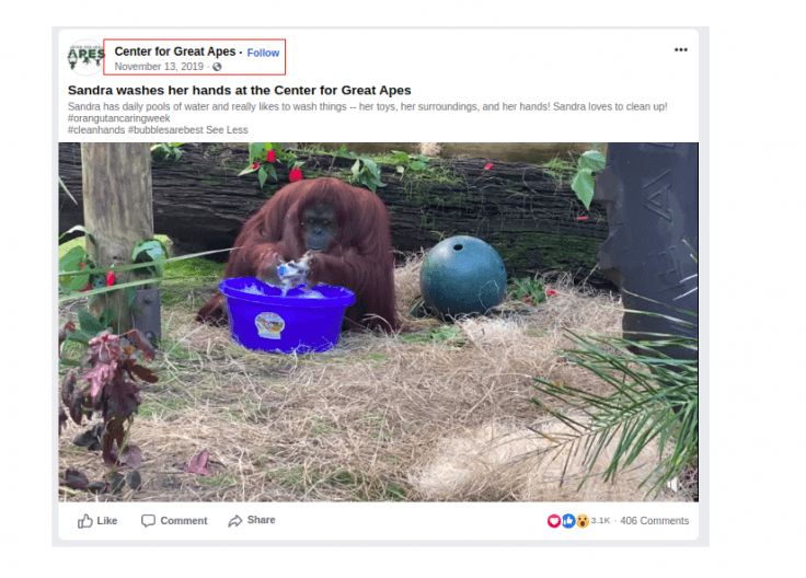 Video of Sandra, the orangutan, washing her hands surfaced online even before the Coronavirus outbreak in Wuhan, China.