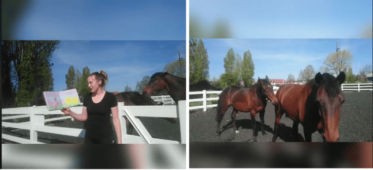 Horses become intimate while nursery teacher records a video of her reading stories