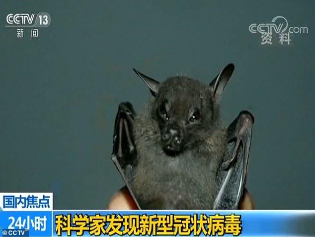 wuhan bat