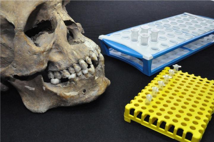 Skulls discoverd in Mexico