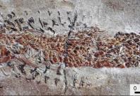 Clarkeiteuthis montefiorei attacking Dorsetichthys bechei