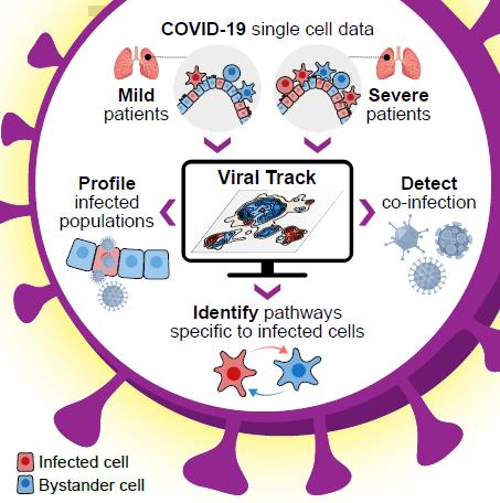 COVID-19 Single Cell Data