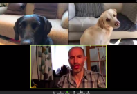 BBC sports broadcaster's video call with dogs