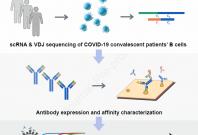 effective coronavirus drug