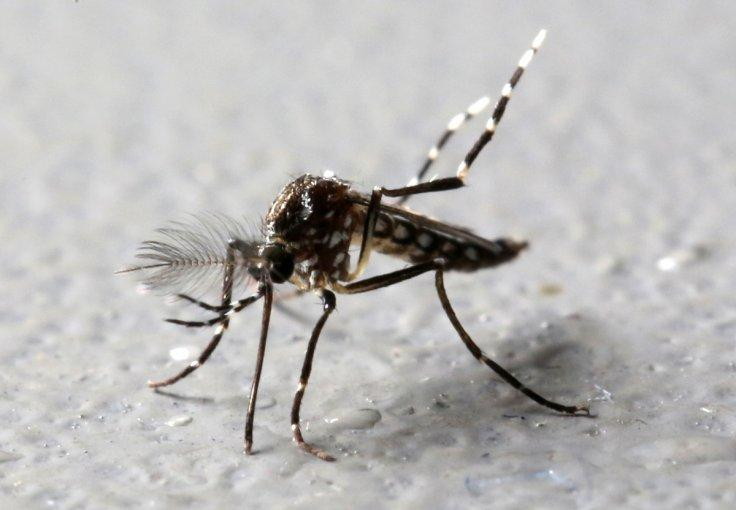 Vietnam confirms 23 Zika virus infected cases, includes pregnant woman