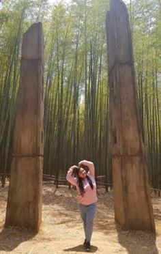 Bamboo Forest TKEM