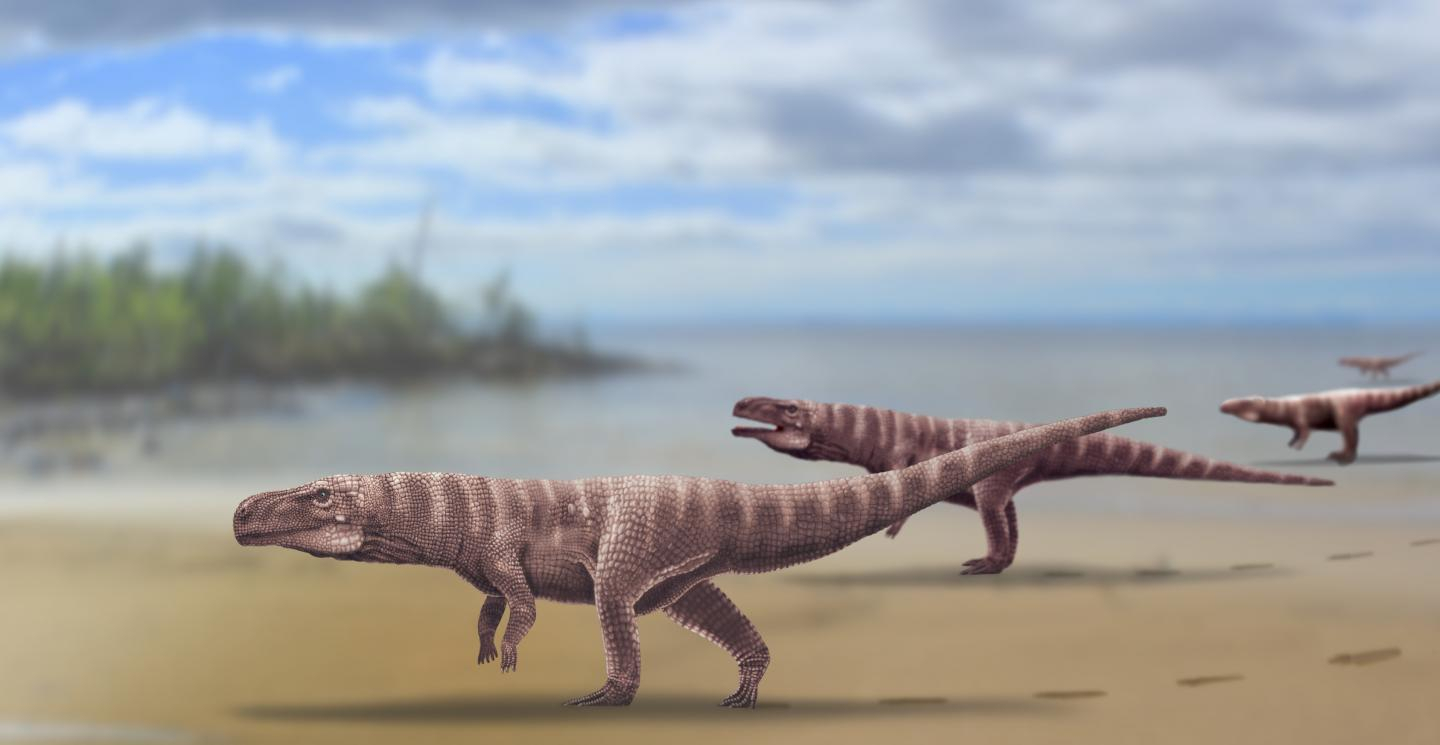 'Enigmatic' footprints reveal prehistoric crocodile that walked on two legs
