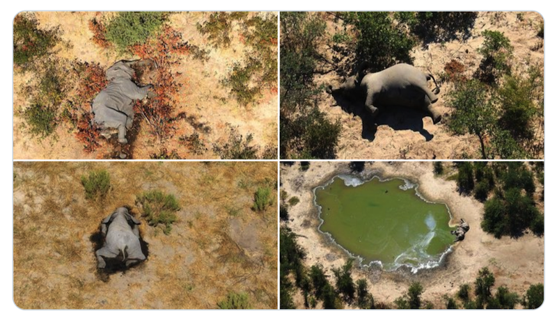 More than 350 elephants have died mysteriously in northern Botswana in what scientists are calling a