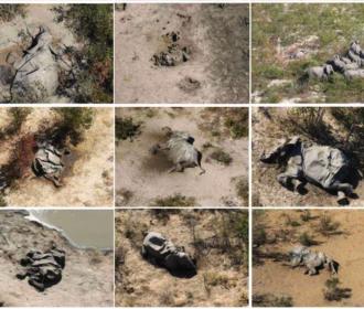 Botswana Elephants Die-Off
