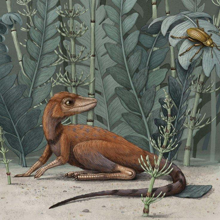 Kongonaphon kely species