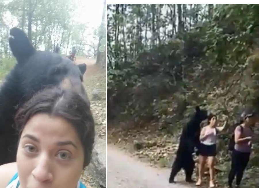 A Woman Takes a Selfie with a Bear in the Wild
