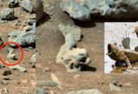 Fish fossil on Mars