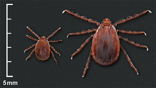 What is a tick-borne virus
