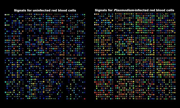 Antibody array data