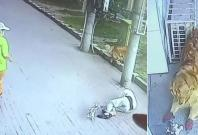China cat attack